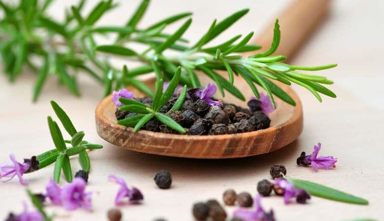 http://comprarcondimentos.com/tienda2014/es/39-hierbas-aromaticas